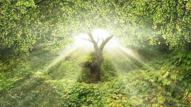Garden of Eden Tree