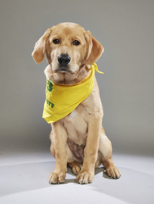 Watch Two PETA Pups Compete in Puppy Bowl XIV